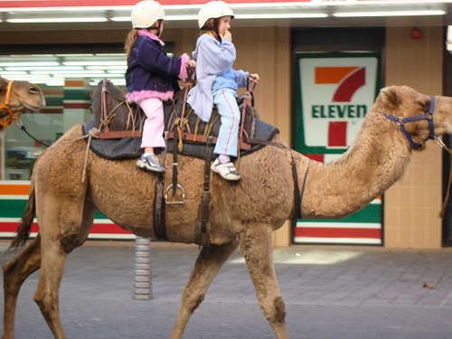 expert camel technology camels totally carry ipods bet bet 7-11s